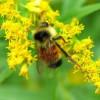 A természet ajándéka: a gyógyhatású antioxidáns flavonoidok