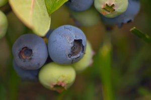 Antioxidáns tartalmú gyümölcsök